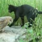 Kolekcjoner SŁODKOŚCI - sowa i kot