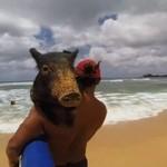 Kama - surfująca świnia