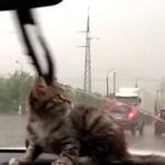 Kot boi się... wycieraczek!