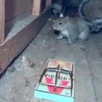 Bo gdy próbuejsz skrzywdzić wiewiórkę...