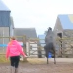 Wielka ucieczka konia