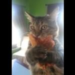 Ten kot najbardziej na świecie kocha pizzę!
