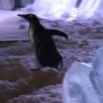 Śmieszne pingwiny - KOMPILACJA