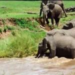 Uwaga, słoniątko się topi!