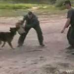 Wypadek podczas treningu polskich psów policyjnych