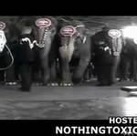 Uważasz, że występy słoni w cyrku są fajne? (STRASZNE!)