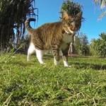 Parkourowe koty - niezwykłe!