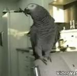 Beatbox papugi