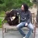 Próbował okraść... szympansa!