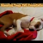 Śpiące psy- SŁODZIAKI!