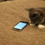 Kot też może bawić się iPhonem!
