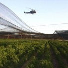 Największa na świecie plantacja marihuany!