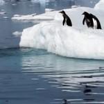 Pingwiny bywają niezdarne - SŁODKIE!