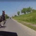 Dziewczyna na motocyklu - bliskie spotkanie z koniem