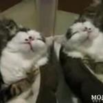 Romantyczne kociaki