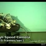 Skaczący japoński robot