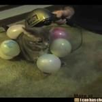 Elektryzowanie balonów kotem