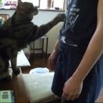 Kot mobilizuje swojego ludzkiego niewolnika