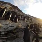 Faile pingwinów - WTF!?