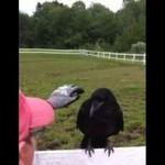 Kruk przyleciał po pomoc