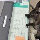 Kolekcjoner SŁODKOŚCI: Zwierzęta też uwielbiają INTERNET!