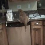 Jak oduczyć kota wskakiwania na szafkę?