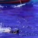 Rekin zaatakował studentkę