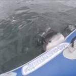 Rekin RZUCIŁ SIĘ na dmuchaną łódź