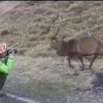 Jeleń nie znosi paparazzi!