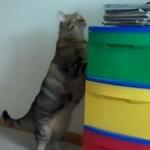 Grube koty nie potrafią skakać