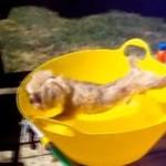 Psy NIENAWIDZĄ kąpieli!