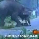 Słoń zaatakował człowieka