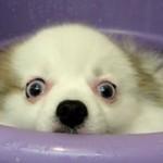 Kąpiel śmiesznego psiaka HIT INTERNETU!