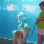 Pies spotyka delfiny