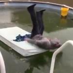 Ojciec skacze do basenu... ZAMARZNIĘTEGO!
