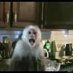 Małpa KRADNIE winogrona!