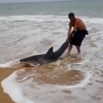 A rekina do morza wrzucam tak!