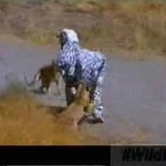 Wildboyz jako zebra