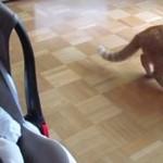 Pierwsze spotkanie kota z dzieckiem