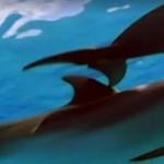 Rekiny uchroniły nurka przed rekinem młotem!