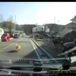 Zdrzemnął się na środku drogi!