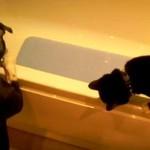 Pies wykąpał kota!