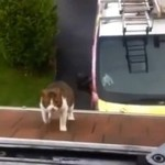 Ambitne koty - nie potrafią skakać!