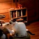 Kot ma gdzieś to, że właśnie czytasz gazetę