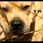 Tret, parkourowy pies