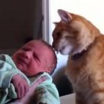 Koty spotykają nowych człoków rodziny