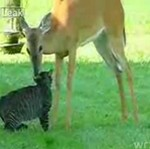 Jelonek i kot - PRZESŁODKIE!