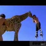 """""""Wild Boyz"""" powiedzą ci prawdę o zwierzętach"""