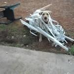 Labradory są niesamowite - KOMPILACJA