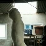 STOP zabijaniu psów w Korei Południowej!!!